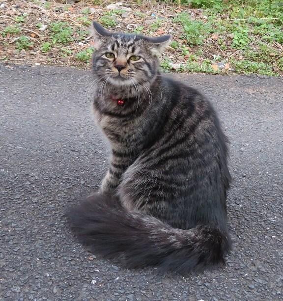 いい顔する猫