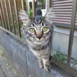 猫の写真集