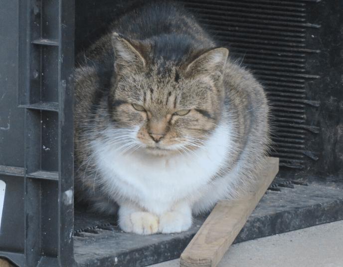 にらんでくる猫