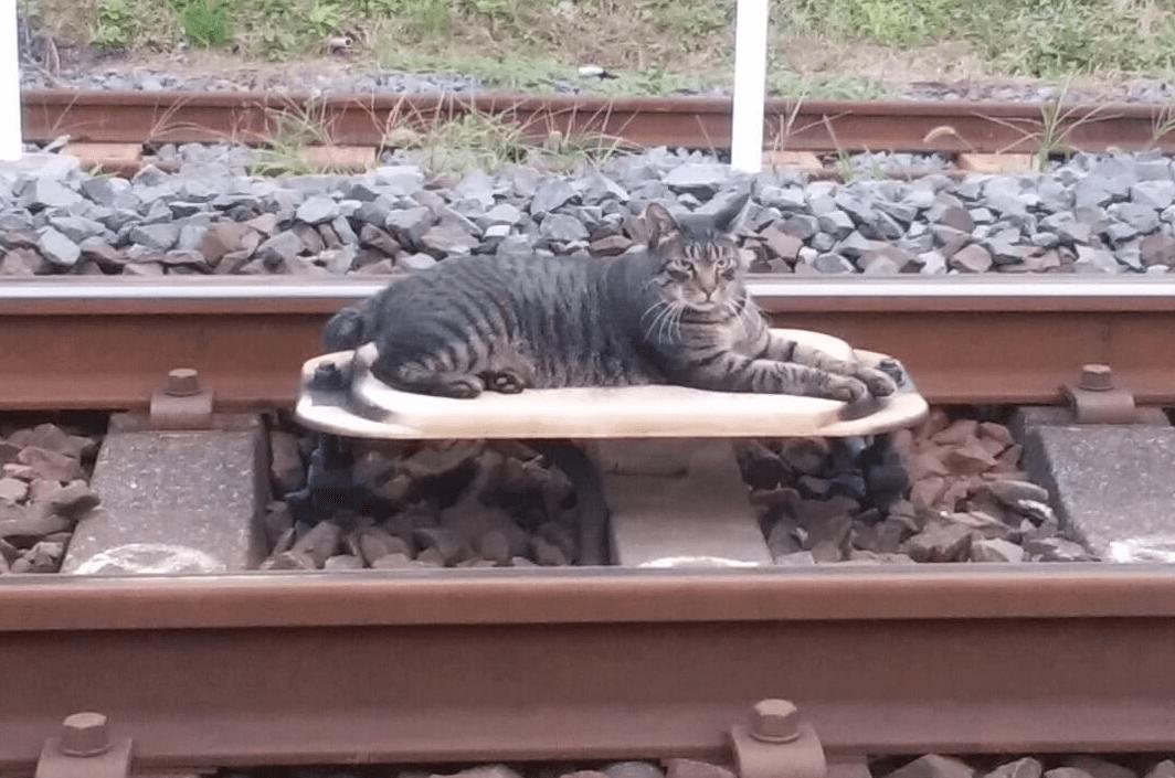 おもしろい猫