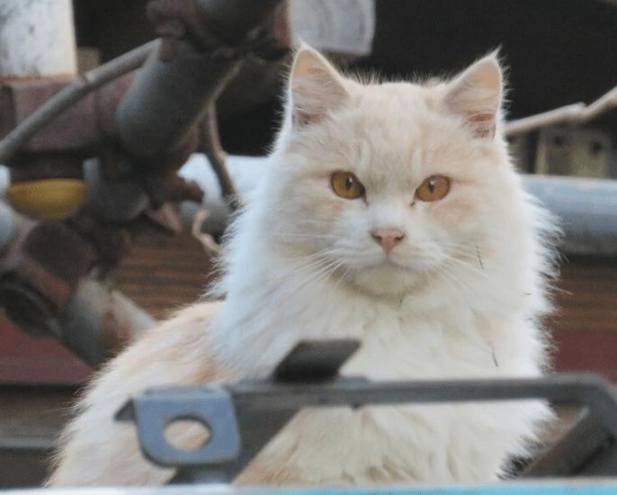 利口そうな猫